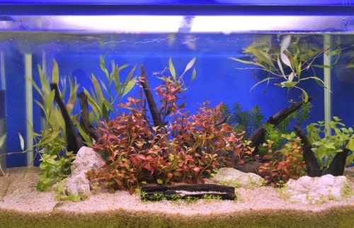 A planted goldfish tank with gravel bottom