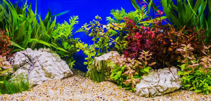 A beautifully aquascaped tank, with many and multicolored plants laid out very nicely