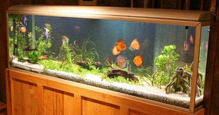 A brightly lit fish tank standing on a nice cabinet, full of plants and fish