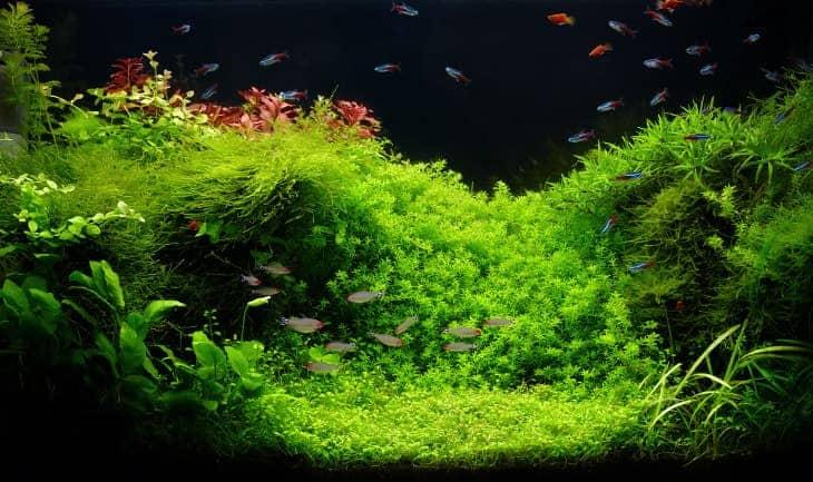 A lush, vivid green aquascaped aquarium with beautiful plants