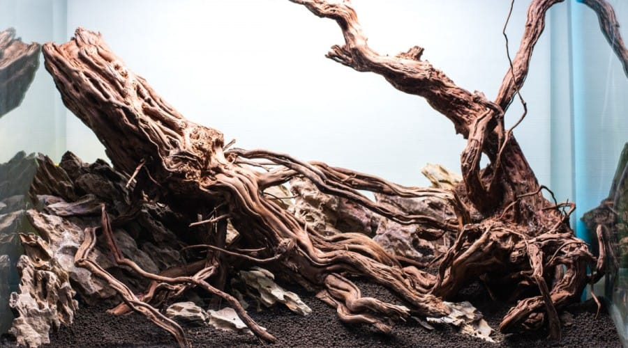 Lareg piece of driftwood sitting in an empty aquarium