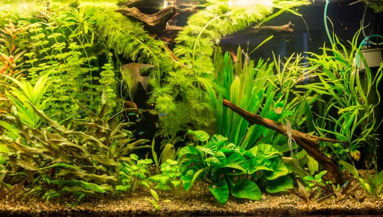 A densely populated planted aquarium with black background
