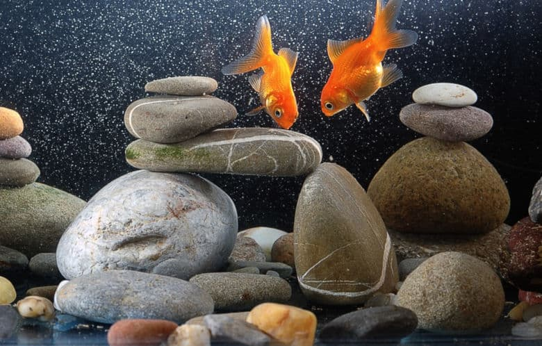 A goldfish tank with rocks, two goldfish, no live plants.