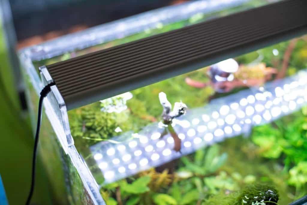 aquarium LED Lighting shining into a live planted tank