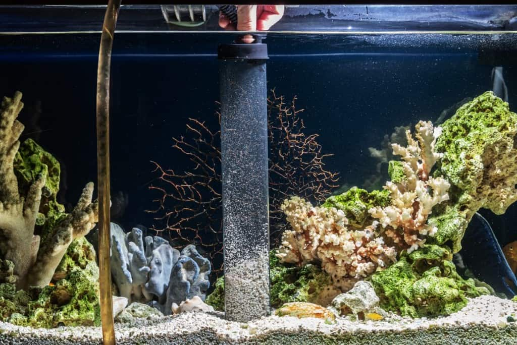 A transparent gravel vacuum being used to clean an aquarium and empty some water