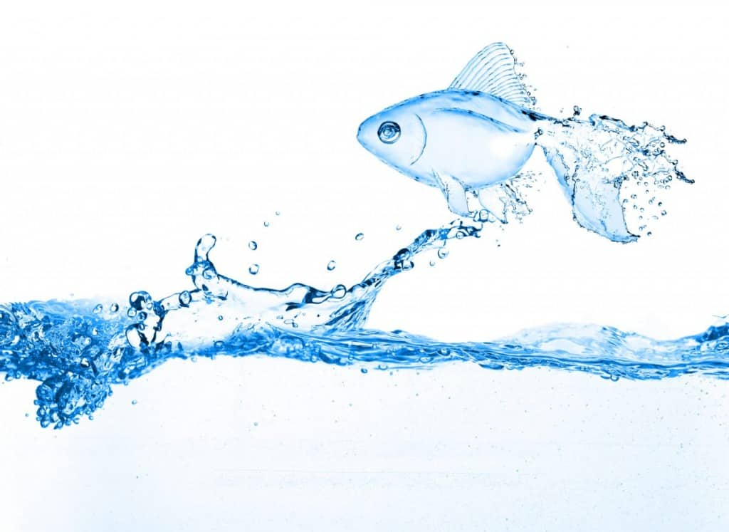 A goldfish image made entirely from splashing water