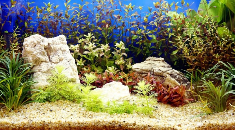 a nicely planted aquarum with crystal clear water