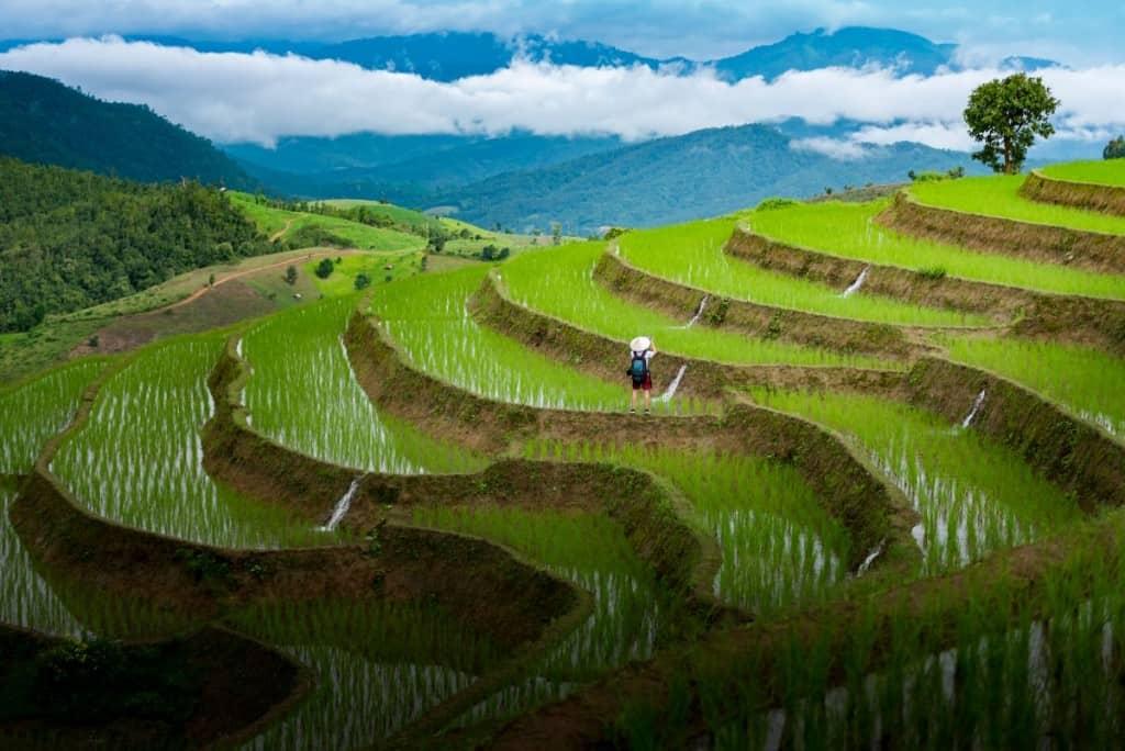 Hill sid rice paddies landscape shot