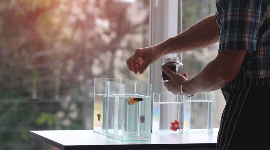 A man feeding betta fish in a small tank near a rooms window