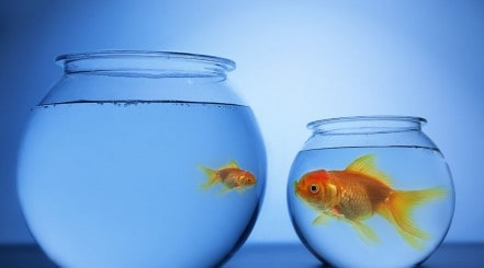 A large goldfish in a small bowl and a small goldfish in a large bowl