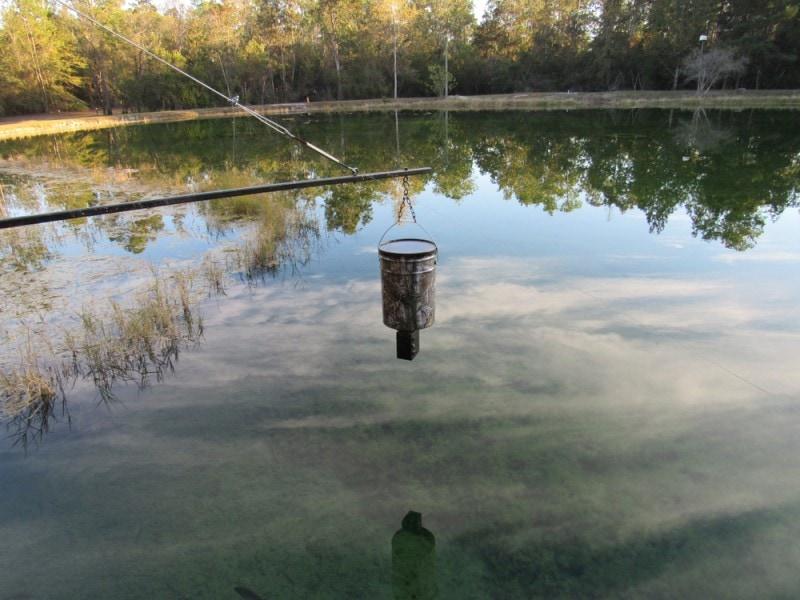automatic pond fish feeder