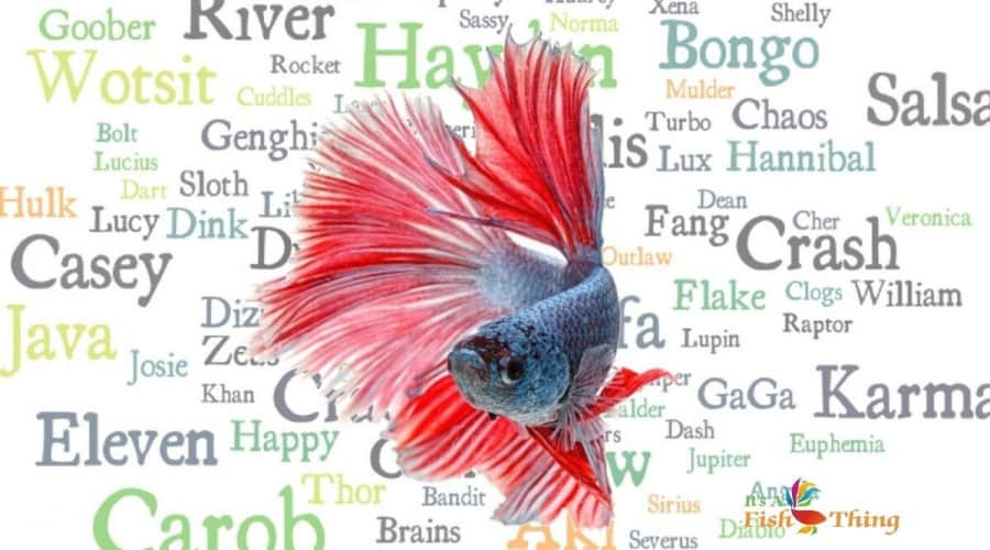 A red and blue betta super-imposed over a word cloud of multi-colored fish names
