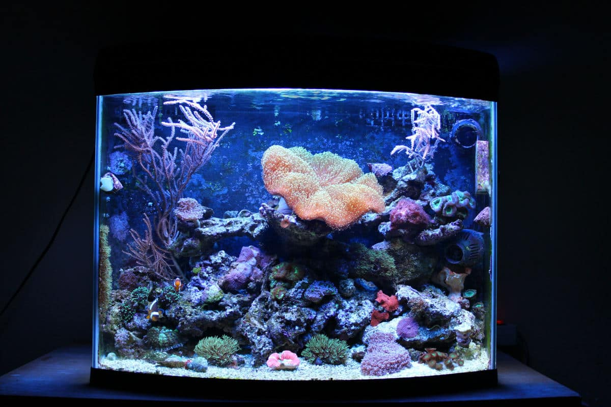 Close up of a nano reef tank, well illuminated in an otherwise dark room