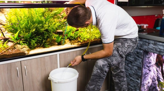 A man changing aquarium water with a hose in a bucket