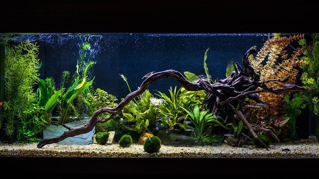 aquarium with moss balls