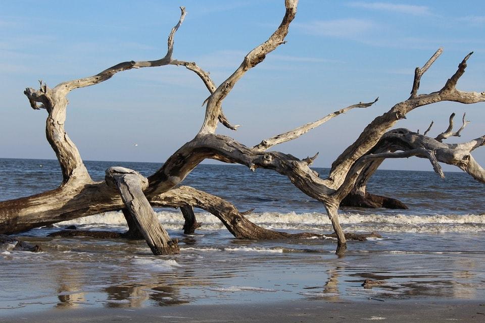 driftwood at the beach