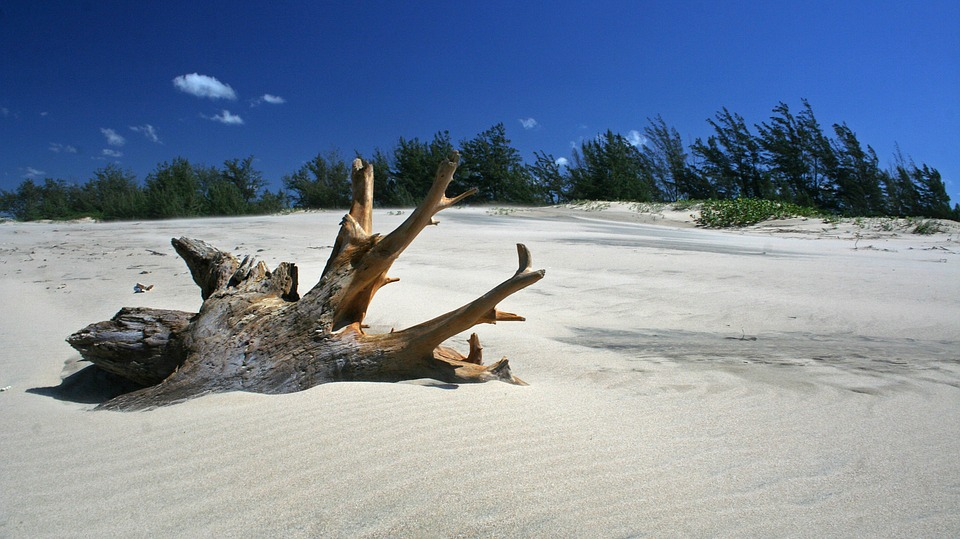 driftwood on the sand