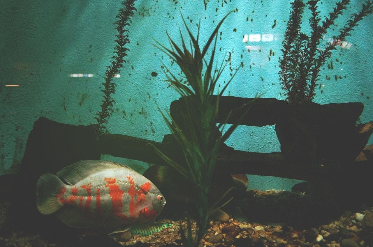 fish inside a dark aquarium