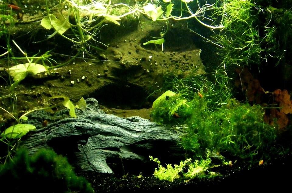 low light aquarium