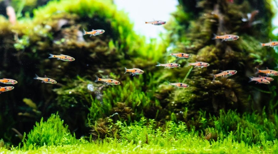 Aquascape Addiction is now a part of Its a Fish Thing