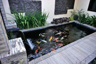 simple back yard fish pond