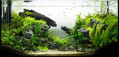 nature aquascape
