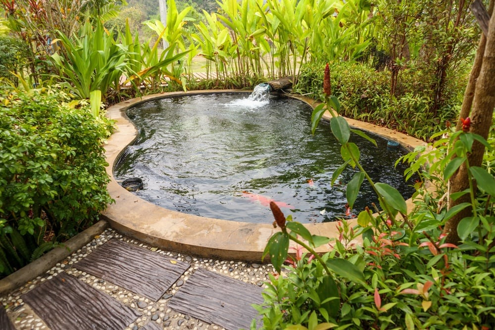 back-yard-fish-pond-setup