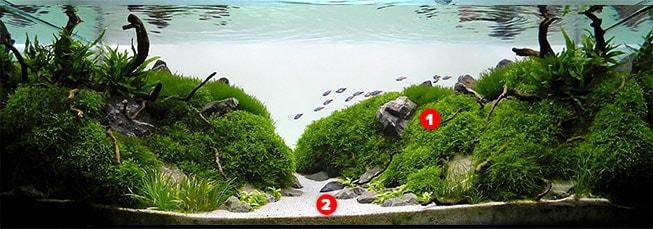 Beginner Aquascaping