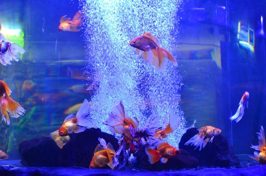 colorful fish in tank with bubbles