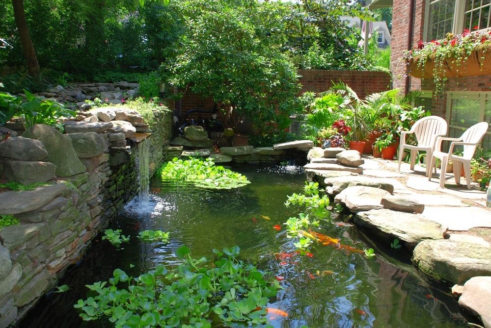 fish pond back yard