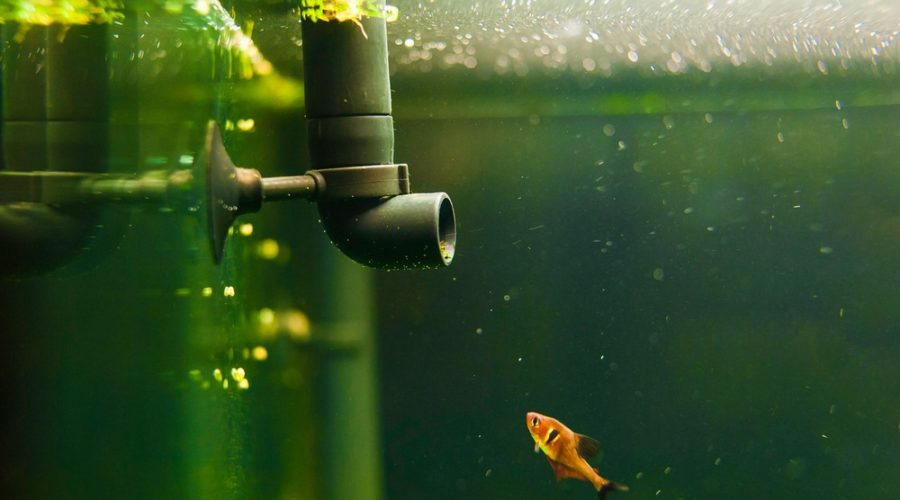 fish tank filter pip and little fish