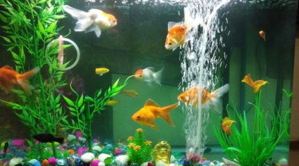 fish tank with filter hose
