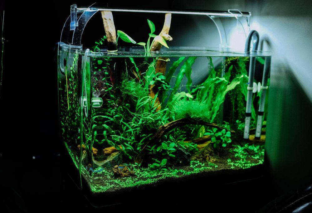 glass aquarium tank