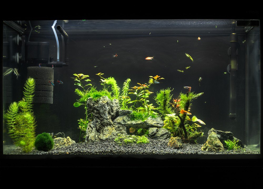 large fish tank with plants and filter