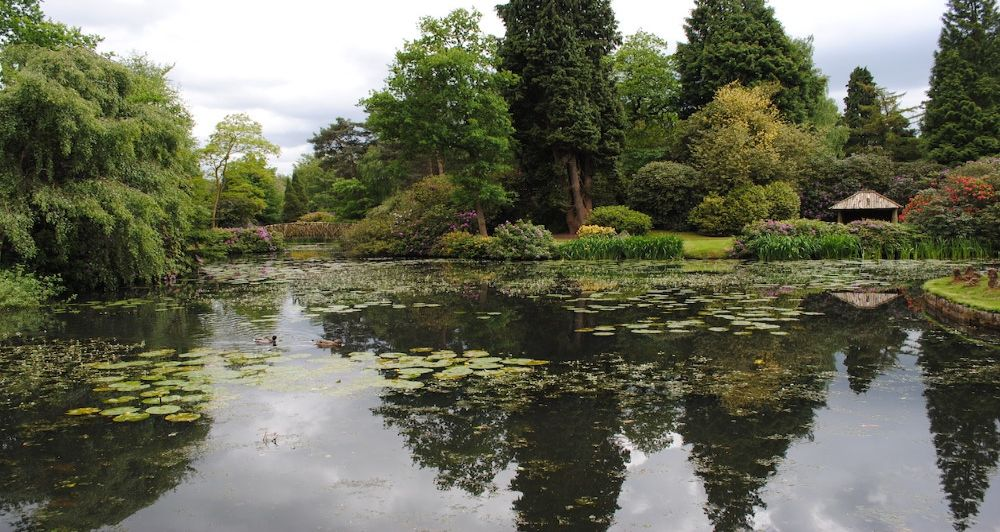 pond for fish