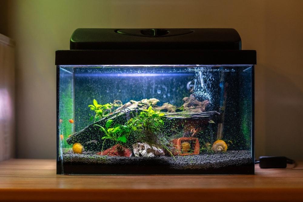 5 gallon fish tank