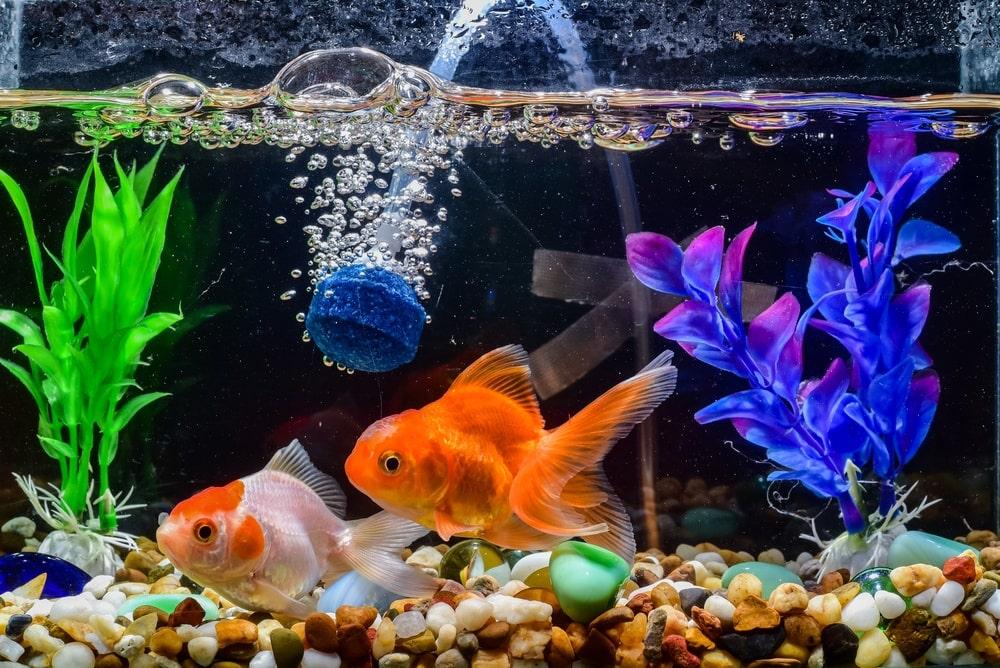 co2 bubbles in tank aquarium