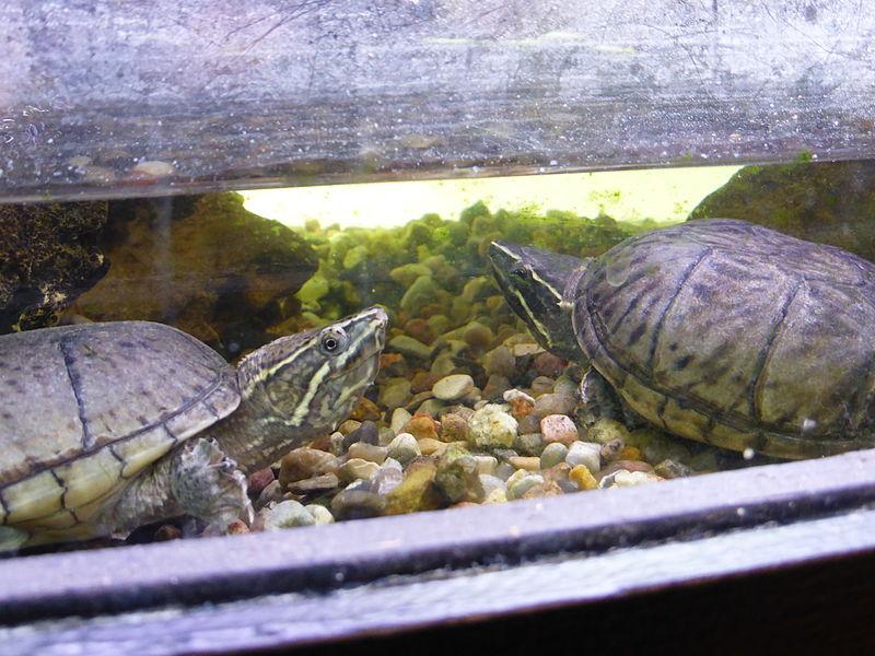 turtle-inside-terrarium