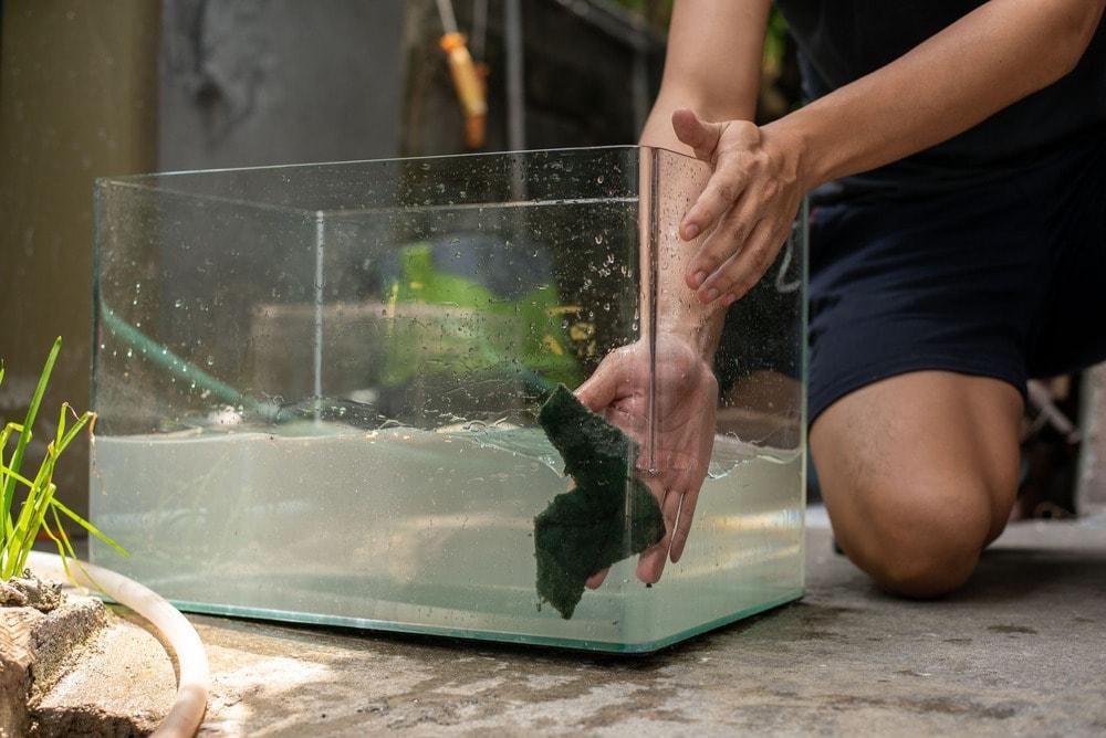 washing-cleaning-fish-tank