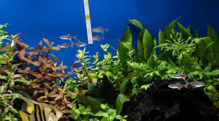 API Freshwater & Saltwater Aquarium Test Strips