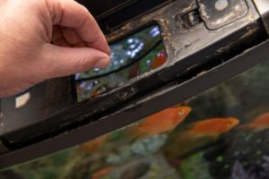 Feeding Fish and Cleaning a Home Tropical Fish Tank_steved_np3_shutterstock