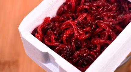 Red-bloodworm_AJSTUDIO-PHOTOGRAPHY_shutterstock