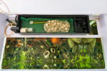 Remote-filter-system-in-the-aquarium_Madhourse_shutterstock