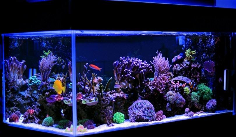 Saltwater-coral-reef-aquarium_Vojce_shutterstock