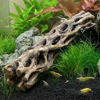 SubstrateSource Cholla Wood Aquarium feat