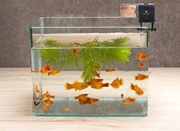 SunGrow Pleco Fish Wafer Feeder feat