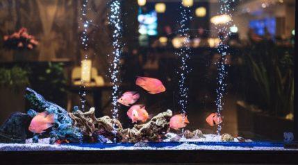 Tropical-fish-in-an-aerated-aquarium_sebastianpictures_shutterstock