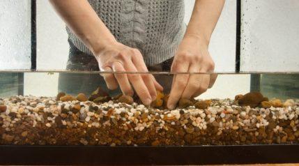 aquarist-preparing-substrate-in-aquarium_rodimov_shutterstock