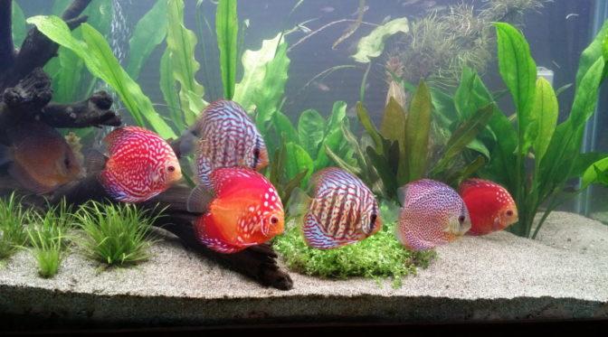 aquarium fish_Piqsels