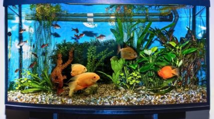 close up of aquarium tank_Solarisys_shutterstock
